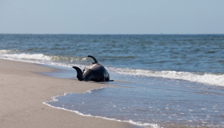 petition protect florida s waters sign to request naples to have